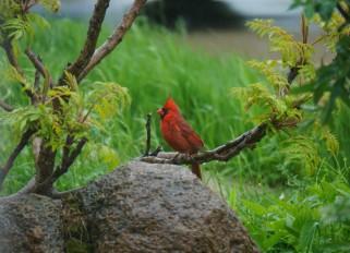 Spring-summer birds