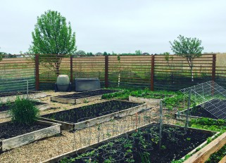 My garden is greener now!