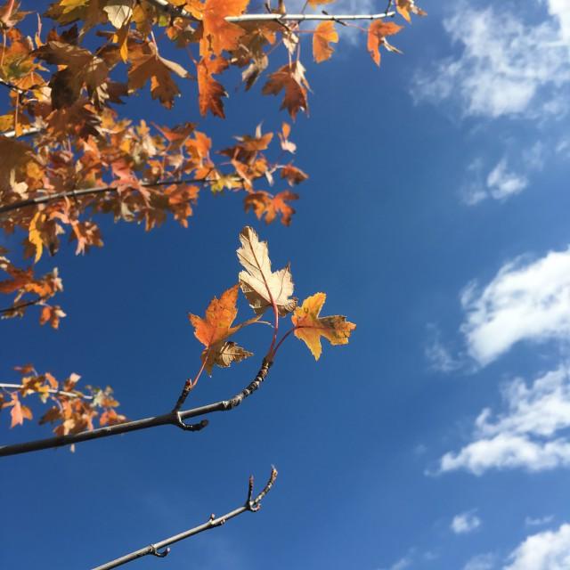 Colors of Minnesota fall