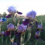 Some flowers in my garden