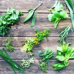 Some herbs from my garden: tarragon, rosemary, sage, basil, lemon basil, thyme, lemon thyme, lemongrass, Mexican tarragon, lavender, chives garlic, oregano, lemon oregano