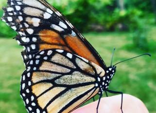 Beautiful butterflies in my garden